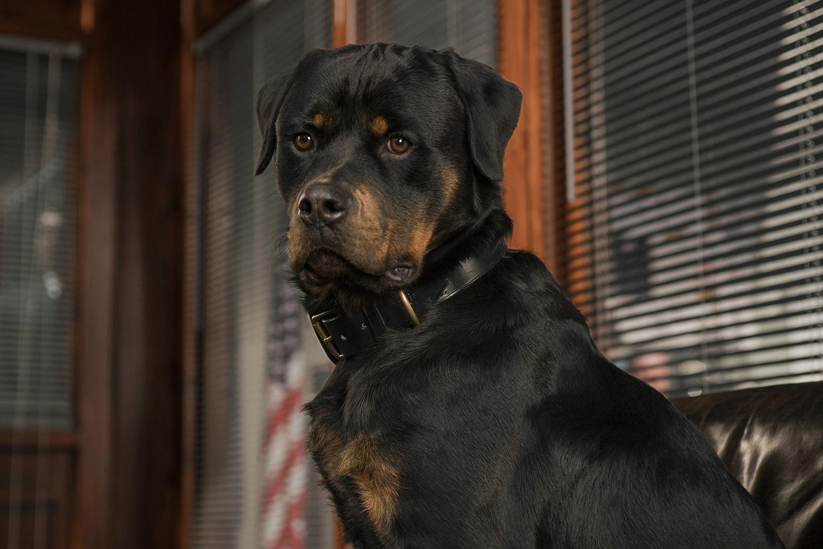 Superagente canino_imagen4