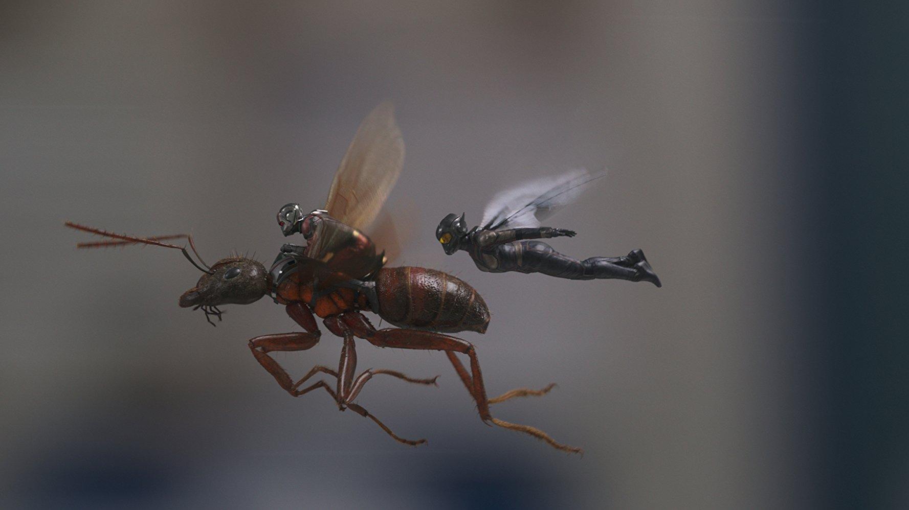 Ant-Man y la Avispa_imagen1