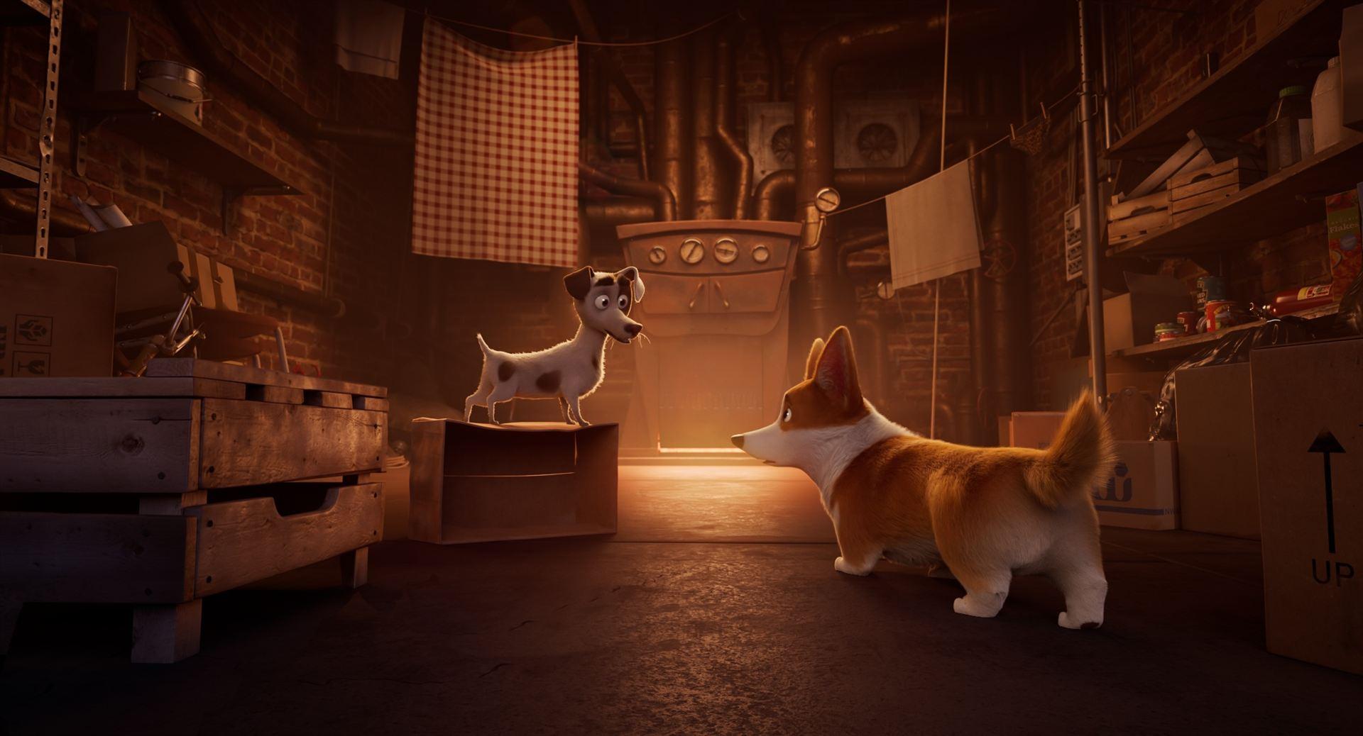 Corgi, las mascotas de la reina_imagen2